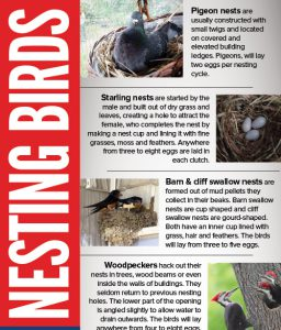 The Facts on Nesting Pest Birds Infographic