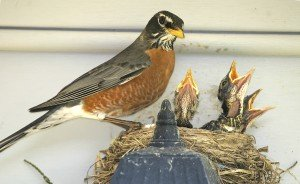 How to Keep Pest Birds from Building Nests on Your Property