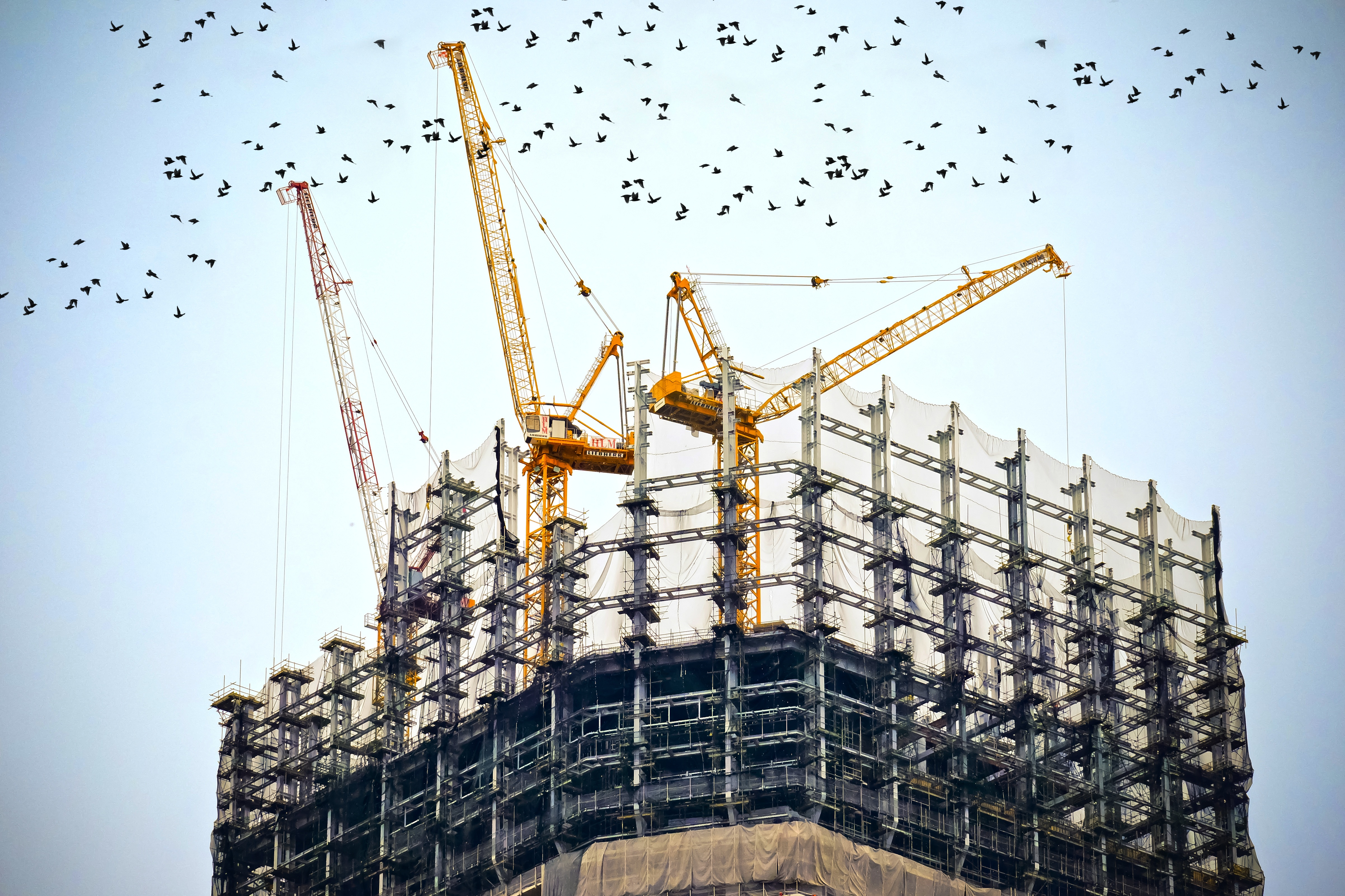 Bird Control in New Construction Sites